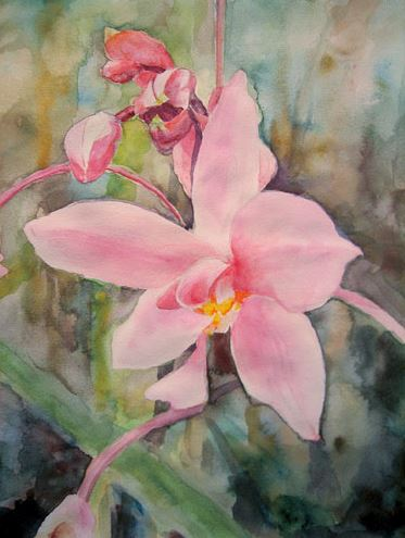 Polynesian Orchid - 6.5x8 - watercolor