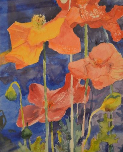 DSS - California Poppies